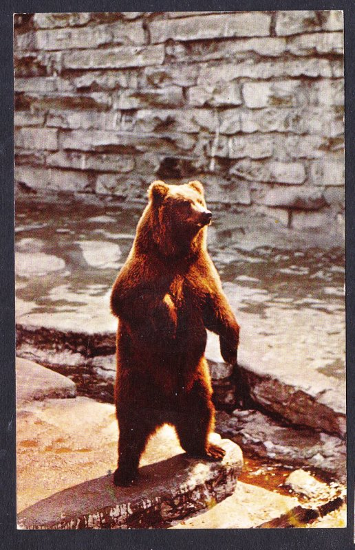 NY - Buffalo Zoological Gardens – Alaskan Kodiak Bear