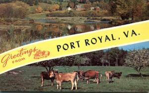Greetings from Port Royal VA, Virginia - Cows and Farm View