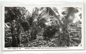 australia, BRISBANE, Bananas Tropical Fruits (1950s) RPPC