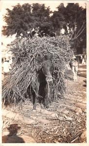 Ecuador, Republica del Ecuador Donkey  Donkey