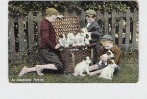 ANTIQUE POSTCARD 'UNEXPECTED PRESENT' BOYS WITH BASKET FULL OF PUPPIES