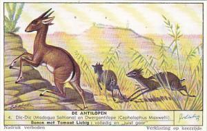 Liebig S1559 Antelopes No 4 Dic-Dic en Dwergantilope