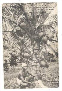 Micronesia Pohnpei Ponape island Caroline islands men near tree, Micronesia ,...