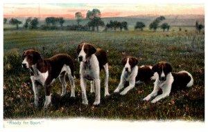 Dog  , Foxhounds