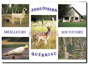 Postcard Modern Zooloisirs burn them Quebriac Tintenic Zoo