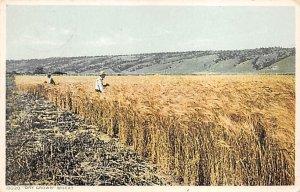 Workers in the Field Farming Unused