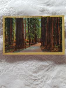 Antique Postcard, Humboldt State Redwood Park, Richardson Grove...