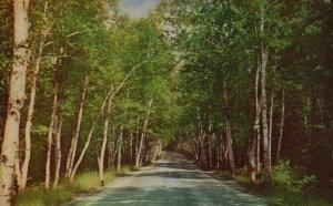 White Mts., NH, Birch Road, Shelburne, 1952 Chrome Vintage Postcard g8500