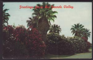 Greetings From The Rio Grande Valley Postcard BIN
