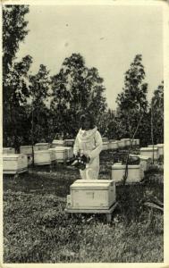 israel palestine, BOROCHOV, Apiary Beekeepers Beekeeping Beehive Bee (1930s)