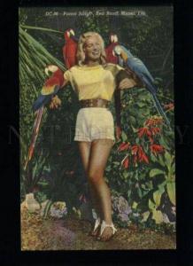 134387 PARROT Jungle Red Road MIAMI Fla Vintage Gulf Stream PC