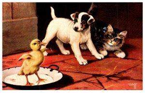 Dog ,  Puppy , Kitten , Duckling