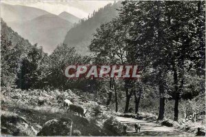 Modern Postcard Road in the valley of lily (hte garonne) road Pigs Pork