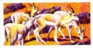Brooke Bond Trade Card Asian Wildlife No 36 Goitred Gazelle
