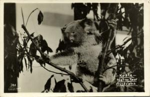 australia, Native Bear, Koala in Tree (1940s) RPPC