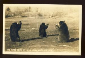Lincoln, New Hampshire/NH Postcard, 3 Bears At Indian Head, White Mountains