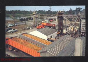 ORANGE PACKING PLANT FLORIDA ORANGES DELIVERY TRUCKS 1950's