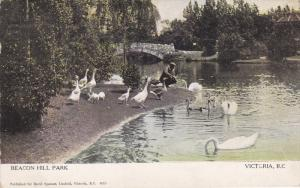 VICTORIA, British Columbia, Canada, PU-1909; Beacon Hill Park, Swans