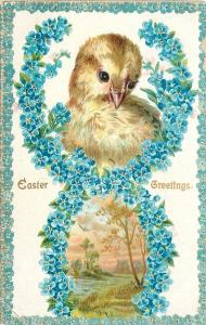 Easter~Fluffy Chick in Blue Forget Me Nots Flower Design~Meadow~White Back~1905