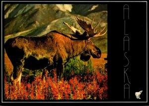Alaska Bull Moose In The Wilds In Midsummer