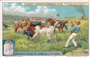 Liebig Trade Card S1176 Breeding Of Useful Animals No 2 Cattle in South America