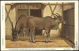 Elk Antelope, Zoo Amsterdam Artis 20s Signed Koekkoek