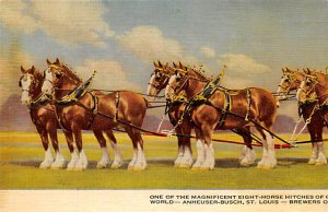 Brewery Post Card Eight Horse Hitches of Anheurser-Busch St. Louis, Mo., USA ...