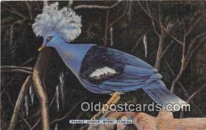 Miami, FL, USA Parrot Jungle Postcard Post Card Miami, FL, USA Parrot Jungle