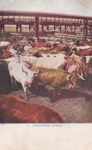Illinois Chicago Cattle Pens At Union Stock Yards