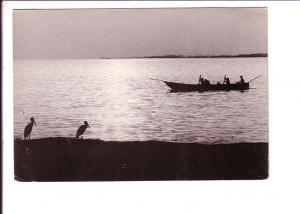 Rowing, Birds, Lake Idi Amin Dada,  Uganda, B&W