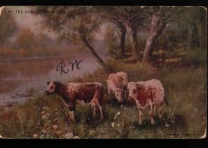 NYC Brooklyn Cattle Edge Woods May VanHarding American News Vintage Postcard B06