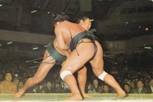 Japan Sumo The National Sport Of Japan