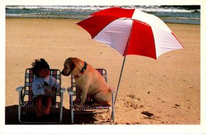 Humour Little Girl and Dog At Beach The North Shore Animal League
