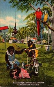 Florida Miami Rare Bird Farm Chimps Monkeys and Macaws Curteich