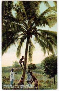 Black American - Indigene Cherchant Le Coco FL