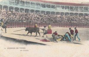 CORRIDA DE TOROS , Spain , 1901-07 ;Un Coleo