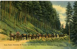 Pack Train of 64 Horses and Mules Coeur d'Alene National Forest - Idaho - Linen