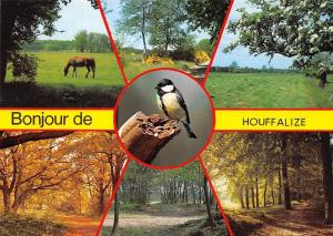 Belgium Bonjour de Houffalize multiviews Forest Road Path Autumn Horse Bird