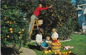 Florida Trees Residents Picking Oranges In Their Backyard 1982