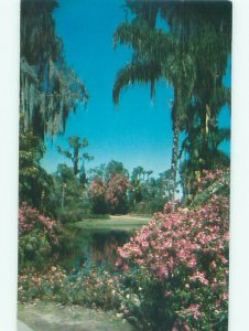 Pre-1980 CYPRESS GARDENS Winter Haven - Near Lakeland & Lake Wales FL AF5994