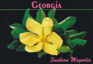 Southern Magnolia Georgia
