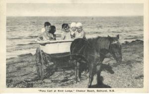 Pony Cart at Kent Lodge Chaleur Beach ~ Bathurst NB New Brunswick c1946 Postcard