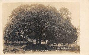 F54/ Corydon Indiana RPPC Postcard Constitutional Elm Tree