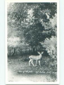 Pre-1950 rppc DEER Mount Wilson - Altadena & Pasadena & Los Angeles CA W0719