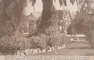 LOS ANGELES, California, 1912 ; Palms in Neighborhood