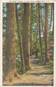 Pennsylvania Philadelphia Mount Pocono Tall Timber In the Pocono Mountains 1936