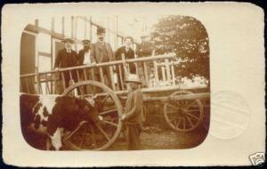 germany, DORTMUND, Farm Scene, Bull, Cow (1913) RPPC