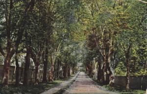 Picturesque Drive In Mount Royal, Montreal, Quebec, Canada, PU-1918