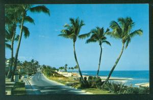 Beach View Ocean Blvd Palm Beach FLORIDA Vintage FL Trees  Postcard