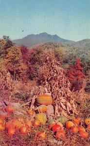 Grandfather Mountain, Pumpkins North Carolina, USA Fruit Assorted Unused